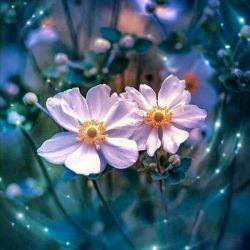 زندگی رسم خوشایندی است زندگی بال و پری دارد با وسعت مرگ!     پرشی دارد                   اندازهٔ                            عشـــــق . . .  #سهراب_سپهری