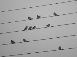"""عکاسی شماره پانزده       موضوع""""خطوط""""       تاریخ: 30 آبان ماه       دوربین نیکون: D5300       لنز نیکور: 70-300       لوکیشن:       عکس منتخب هفته از آقای حسن جوکار"""