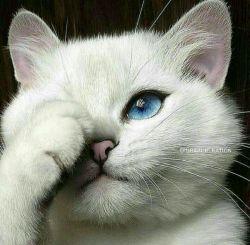 یه خار ماهی رفته تو چشمم