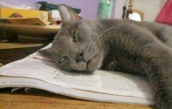این دیگه آخرشه عجب گربه ی خرخونیه....