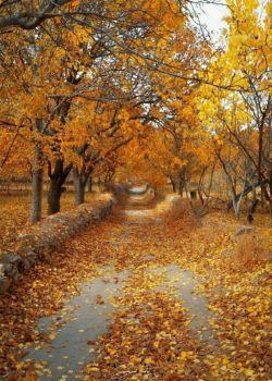 از بس که خدا عاشق نقاشی بود،،، هر فصل به روی بوم، یک چیز کشید... یک بار ولی گمان کنم شاعر شد،،، یک گوشه ی دنج رفت و پاییز کشید!...