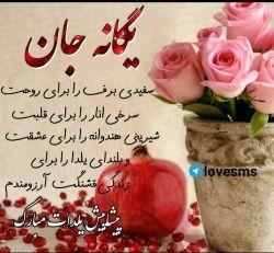 @baharzl