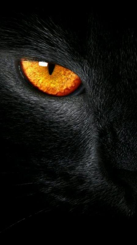 وقتی که من عاشق شدم شیطان به نامم سجده کرد،  آدم زمینی تر شدو عالم به آدم سجده کرد ....!؟