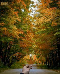 پاییز با همه ب زیباییش در گذر است. اصلا پاییز یعنی آمدن و خاطره ساختن و رفتن. رنگهای گرم در فصل سرد معنایی جز محبت ندارد. فصل عاشقی، فصل دلدادگی با طبیعت، فصل زیبایی ها، آخرین نفس های خود را می کشد. اینک نوبت خزان است و سکوت.... طبیعت در انتظار بهار است و روییدن دوباره از دل خاک.