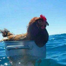 قایقی خواهم ساخت  خواهم انداخت به آب  دور خواهم شد از این خاک غریب @_@