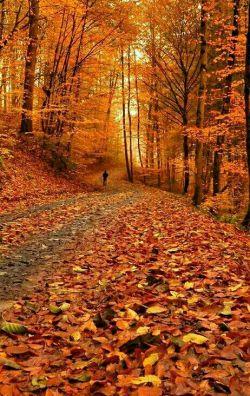 یلدا یک دقیقه بغض اضافی است که مانده درگلوی پاییزی ترین شب سال....