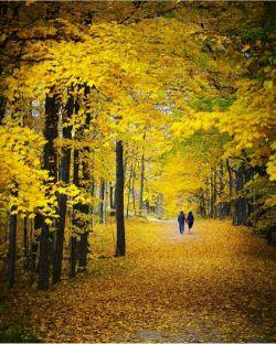پاییز میرود..... کامنت را بخوانید. لطفا..... حتما......