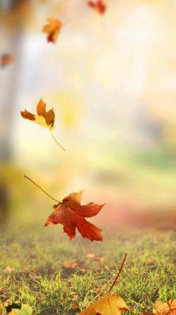 پاییز هم تمام شد و من ماندم و حجم شعرهایی که امتدادشان را اگر دنبال کنی به برگ ریزان پاییز می رسی ... می دانی، اصلا انتهای شعرهایم بماند برای پاییز سال آینده خدا را چه دیدی، شاید از انتهای شعرهایم دوباره سر درآوردی و عاشقم شدی ...