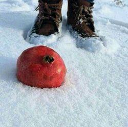 پس از یلدا سحرگاهت همایون،  طلوع روشن راهت همایون،  رسید اسب زمستان،  یالش از برف ،  نخستین روز دی ماهت همایون...شبتون همایونی^_^