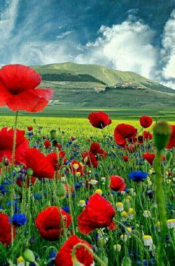 زندگی یک فهم است.فکرزنجیرکنی یاپرواز....درهمان خواهی ماند....