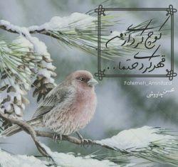 بگو بر می گردم #محسن چاووشی