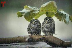 سلام عصر برفی بارونیتون بخیر :) ... پ.ن: سرما خوردم بد، ببخشید اگه جواب کامنت نمیدم :|