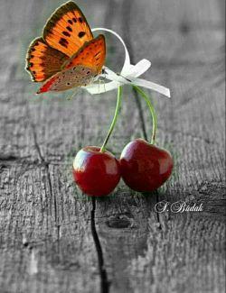 قلمت را بردار .... بنویس از همه ی خوبی ها ..... زندگی ..عشق ..امید ... و هر آن چه بر روی زمین زیباست ..... گل مریم ....گل رز ... بنویس از دل یک عاشق بی تاب وصال... از تمنا بنویس .... از دل کوچک یک غنچه که وقت است دگر باز شود ..... از غروبی بنویس که.... چون یاقوت و شقایق سرخ است .. بنویس از لبخند .... بنویس از دوستی و دوست داشتن .. از نگاهی بنویس که پر از عشق به هر سوی جهان می نگرد .. قلمت را بردار .... روی کاغذ بنویس : زندگی با همه تلخی هایش زیباست.  