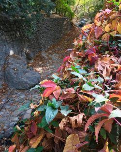 توی جاده قدم بزن، برو زیر درخت کُنار بشین و از وزیدن نسیم صبحگاهی لذت ببر و همراه با رقص برگ ها شادی کن
