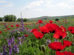 بهار زیبای شهر ایردموسی