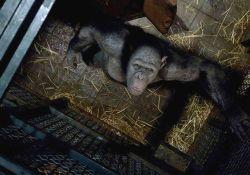 فیلم سینمایی ظهور سیاره میمون ها  www.filimo.com/m/Y1kmA