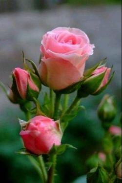 سلام شبتون بخیر و خوشی تقدیم به نگاه زیبای شما خوبان