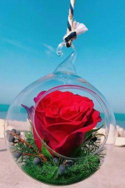 ❤باغبان عمری طولانی دارد ❤چون با گل سروکار دارد ❤ولی من عمری طولانی تر ❤از باغبان دارم چون دوستانی ❤زیباتر از گل مثل شما دارم ❤هرچی آرزوی خوبه مال شما