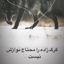 گرگ زاده را محتاج نوازش نیست...