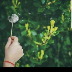 قاصدک را میبوسم  وبه آسمان میفرستم  می دانم نوید وصل را همیشه برای من آورده است. ای مهربان خوش خبر  عشقم را به دیدارم بیار