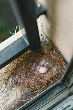 وقتی کبوتری پشت پنجره خونه ی شما لانه می سازه یعنی کل شهرروگشته وامن ترازخونه ی شماپیدانکرده....