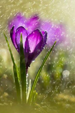 آرزویت را برآورده میکند،آن خدایی که آسمان را برای خنداندن گلی میگریاند...