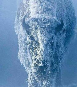 سخت ترین یخ ها هم  روزے آب خواهد شد، امّا *   سردے بعضۍ آدمها نہ...