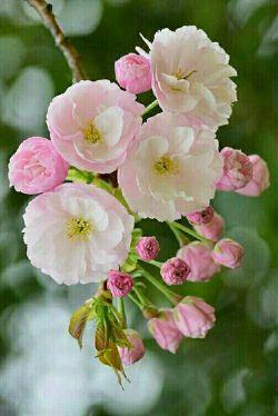 خوشبختی سه ستون دارد....   فراموش کردن  تلخی های دیروز...  غنیمت شمردن شیرینی های امروز....  امیدواری به  فرصت های فردا