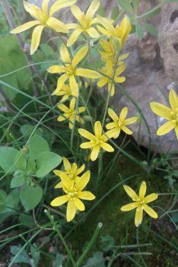مناطق جنوب فارس در فصل زمستان بهار شروع میشه و صحرا لباس سبز میپوشه .این گل های وحشی هم از همون جا عکسشو گرفتم