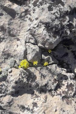 آفرین به من که ازشون عکس گرفتم یا این گل ها که سنگ کوه هم حریف شون نشده
