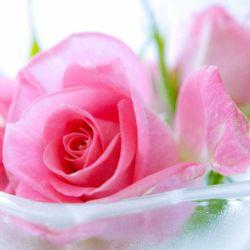 گلاب و عرقیاتگیاهی کاشان