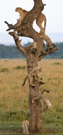 به نظرتون این چ درختیه؟؟ :)