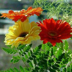 سه شاخه گل براتون می فرستم یکی از طرف خدا که نگهدارتون باشه دومی از طرف خودم که دوست تون دارم سومی از طرف معرفت  که شما دارید