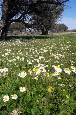 جاتون خالی دیروز تو این گل ها عکس میگرفتم .چه تصویری شد