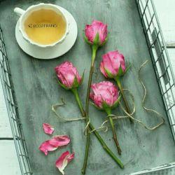 """در زیباترین عاشقانه های جهان همیشه """"قلب"""" یک زن در میان است! زن اگر نباشد  پرنده ی شعر  در شاخه های دفترِ هیچ شاعری  پر نمی زند..."""