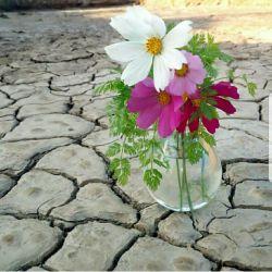 چشمم اگر خطا کند، دل که خطا نمی کند / بهار با شقایق عاقبت وفا نمی کند #پاورقی