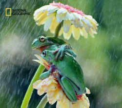 عکس بالا که در آن صحنهای جالب و رمانتیک به تصویر کشیده است درسال 2016 از نگاه کاربران و عکاسان نشنال جئوگرافیک به عنوان یکی از برترین عکسها انتخاب شد