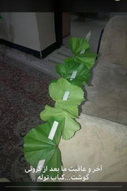 شرح در متن .توله نوعی سبزی خوردنی که در فصل زمستان و بهار در جنوب کشور به صورت خودرو سبز میشه