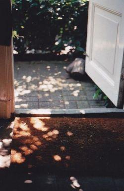 عشق که بر در خانه ات کوبید  زود در را باز نکن  بعضی ها مثل کودکان  در میزنند و فرار می کنند...#مورات_هان_مونگان