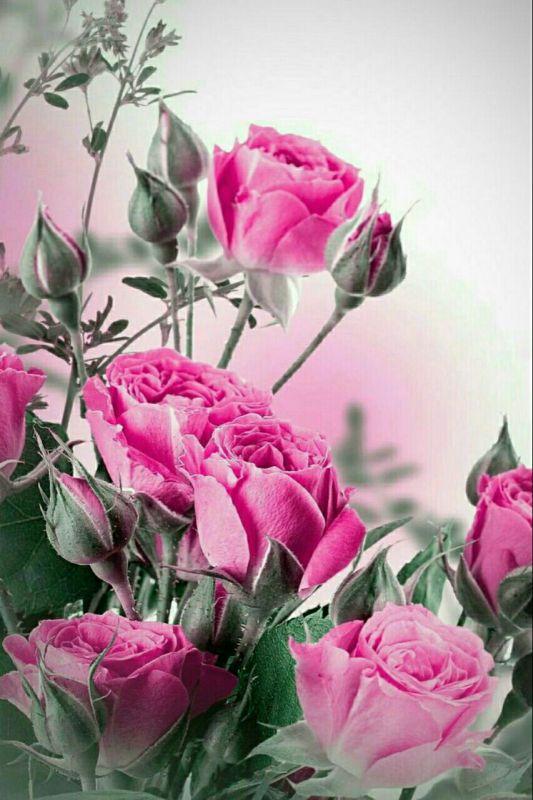 تا میتونی بہ دلی امید ببخش،، تا میتونی لبخند هدیہ ڪن بہ چہرہ های غمگین ،، تا میتونی دلی رو شاد ڪن،، همین ڪارهای ڪوچیڪ، میشہ یہ دعای خیر بزرگ درحقت