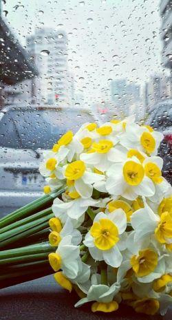 """میگویند باران که میزند بوی """"خاک"""" بلند می شود … اما اینجا باران که میزند بوی """"خاطره ها"""" بلند میشود !..."""