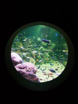 می نشینم لب حوض .. گردش ماهی ها .. روشنی .. من .. گل ، آب ..چه درونم تنهاست  / سهراب سپهری