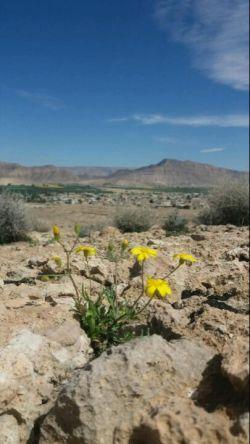 بلندی های کوه شرفویه لارستان فارس