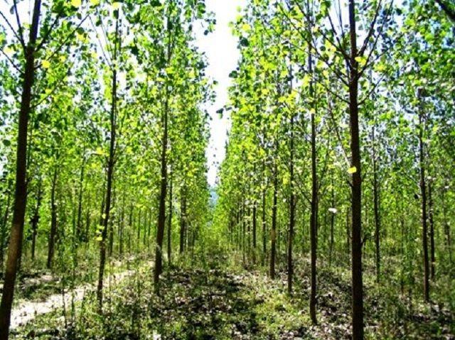 کاشت نهال، گامی برای تامین نیاز صنایع چوب و کاغذ است معاون محیط زیست مازندران گفت: کاشت نهال، گامی برای تامین نیاز صنایع چوب و کاغذ است و باید گسترش یابد. ادامه خبر در: http://www.paperandwood.com/Fa/NewsItem/?nID=7111