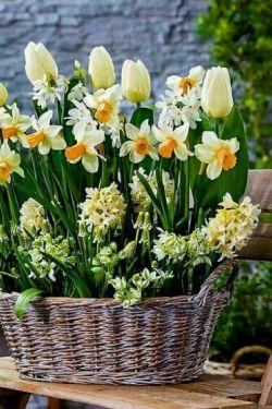 ❁﷽❁.. ذکر روز دوشنبه {یا قاضیُ الحاجات..ای براورنده حاجات}بیدار شو؛ همه چیز مهیاست آرامش صبح نفس های آخر  زمستان هدفی داشته باش و حرکت را آغاز کن با یاد و نامِ پرودگارِ مهربانی ها... برای زیبا زندگی کردن، کوتاهیِ عمر را بهانه نکنید. عمر کوتاه نیست بلکه ما کوتاهی میکنیم،... سلااااااام صبح تون بخیر  که به اندازه تمام شکوفه های بهاری برایتان آرزوهای قشنگ میکنم  ..۹۷/۱۲/۲۰