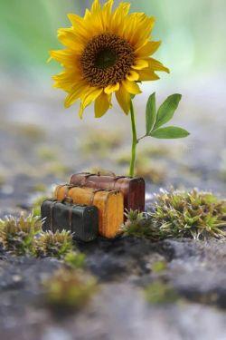 ❁﷽❁.. ذکر روز سه شنبه  {یا اَرحَمَ الراحمین.. ای بخشنده ترین بخشندگان} ای خدای مهربان ؛ به من دلی عطا کن که  مشتاق نزدیکی به تو باشد.  و زبانی که صادق ترین سخنانش  به سوی تو بالا رود. و دیده حقیقت بینی که  به درگاه تو تقرب جوید. پس تو ای مهربانم.... نیت نیک مرا به رحمت و محبت خود  ناامید نساز...سلااااام صبحتون بخیر و شادی امروزتون سراسر امید و نیکبختی.. .۹۷/۱۲/۲۱