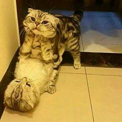 وقتی قهری میخواد به زور بوست کنه هههه  سلام دوستای گلم کسی منو یادش هست ؟