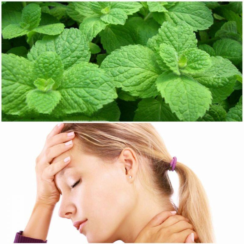 نعنا ترکیب فعالی به نام منتول دارد که میتواند باعث کنترل سر درد در افراد مبتلا به میگرن شود این گیاه رگ های خونی را باز میکند و باعث می شود خون در سر بهتر جریان یابد.