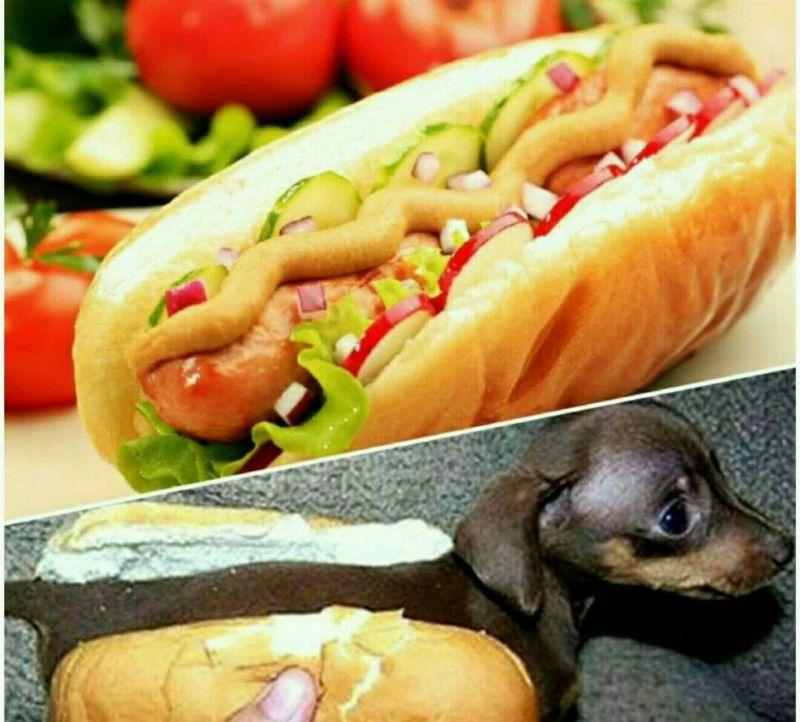 در قرن 19 در آمریکا این باور که سوسیس ها از گوشت سگ درست شده اند آنقدر گسترش یافت که مردم شروع به استفاده از واژه هات داگ یا سگ داغ کردند که تا امروز نیز به همین نام معروف است.