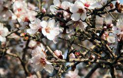 پروردگار مهربان من! قدرتی عطا کن تا بتوانم در فرصتی که به من برای دیدن بهار بخشیده ای بر شاخسار وجودم شکوفه ایمان بپرورانم.